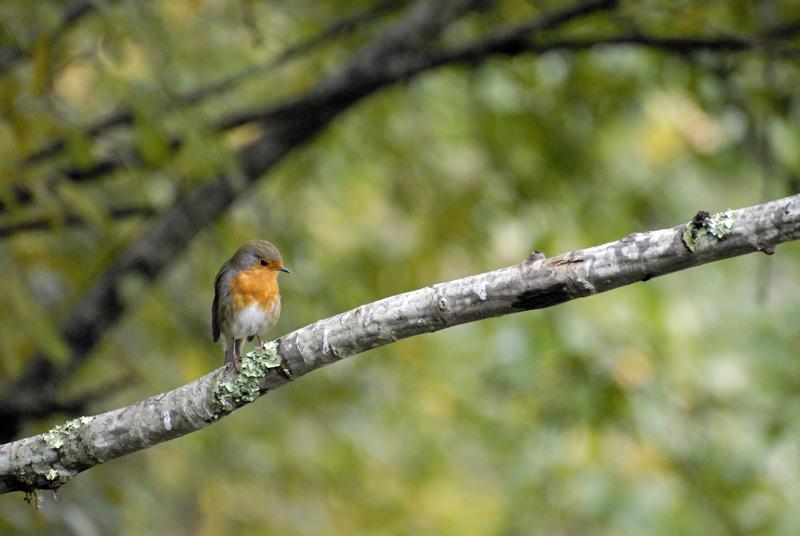 Parc ornithologique du Teich Le%20Teich%20%281%29