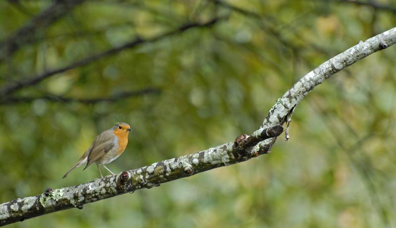 Parc ornithologique du Teich Le%20Teich%20%283%29