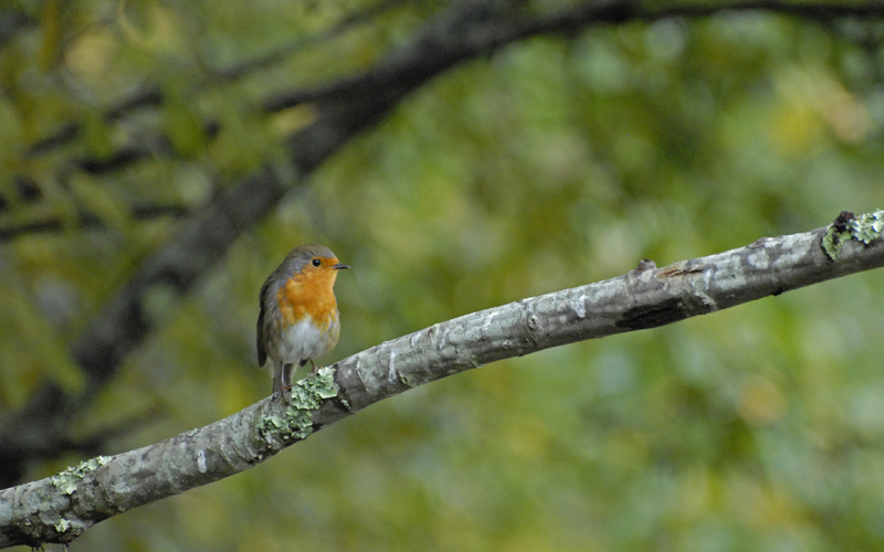 Parc ornithologique du Teich Le%20Teich