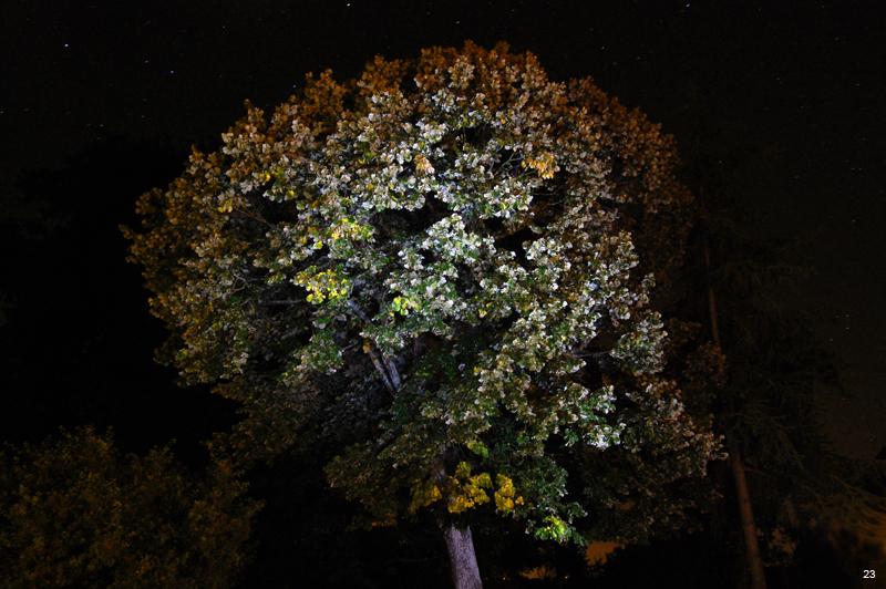 L'arbre magique Anniversaire%20(20)