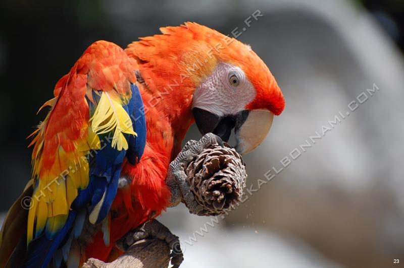 Les plus beaux piqués Zoo%20de%20la%20Palmyre%20(45)